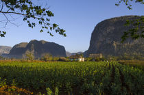 Viñales Valley & Tobacco Crop by Danita Delimont