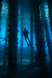 Silhouette of scuba diver under pier by Danita Delimont