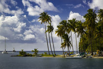 Palm trees at entrance to Marigot Bay, St von Danita Delimont