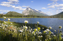 Wild flowers, Mt Rundle, Vermillion Lake, Banff National Par... von Danita Delimont
