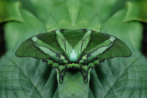 Canada, Victoria, Victoria Butterfly Gardens by Danita Delimont
