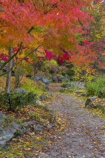 Pathway leads to park bench in autumn at Japanese Gardens in... von Danita Delimont