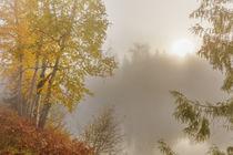 Slocan River Autumn by Danita Delimont
