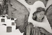 Canada, Ottawa, Beechwood Cemetery by Danita Delimont