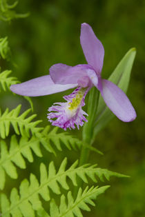 Canada, Quebec, Mount St-Bruno Conservation Park von Danita Delimont