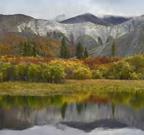 Wernecke Mountains in autumn, Yukon Territory, Canada. by Danita Delimont