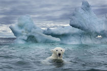 Polar Bear on Sea Ice near Repulse Bay, Nunavut, Canada by Danita Delimont