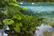 Albania, Muzine, Blue Eye Spring, spring flowing from underg... by Danita Delimont
