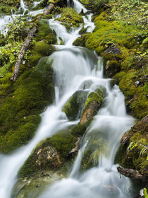 Waterfall in Karwendel valley, Austria von Danita Delimont