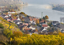 The village Spitz in the Wachau by Danita Delimont