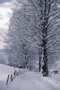 Austria, Tirol, Kitzbuhel, Austria's premier ski town in winter. by Danita Delimont