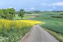 Spring Farm Fields by Danita Delimont