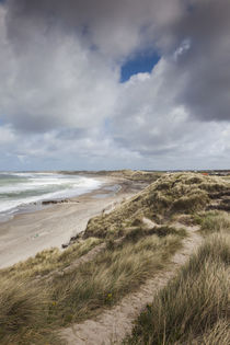 Denmark, Jutland, Klitmoller, windsurfing capital of Denmark... von Danita Delimont