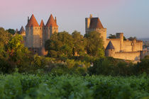 Dawn in a vineyard overlooking la Cite Carcassonne, Languedo... by Danita Delimont