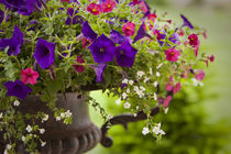 Colorful flowers in a cast iron pot. by Danita Delimont