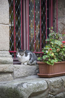 Cat with Windowbox by Danita Delimont