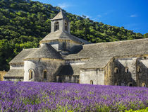 Seananque Abbey with Lavender in full bloom by Danita Delimont