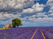 Old Farm House in Field of Lavender by Danita Delimont