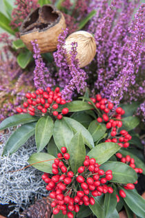 Christmas floral decoration, Wertheim, Germany by Danita Delimont