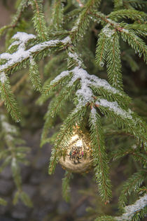 Gold glass Christmas ornament on evergreen tree with snow on... by Danita Delimont