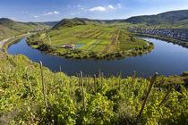 Bremm, Rhineland-palatinate, Germany by Danita Delimont