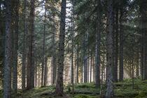 Germany, Baden-Wurttemberg, Black Forest, Titisee-Neustadt, ... von Danita Delimont