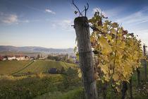 Germany, Baden-Wurttemberg, Burkheim, Kaiserstuhl Area, vine... by Danita Delimont