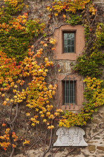 Germany, Hesse, Wetzlar, building covered with ivy, autumn von Danita Delimont