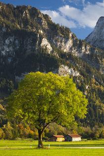 Germany, Bavaria, Hohenschwangau, alpine landscape von Danita Delimont