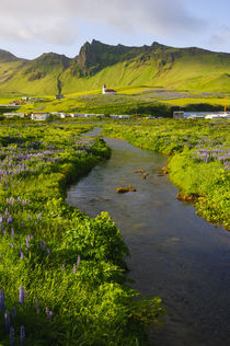 South. Vik i Myrdal. Stream running down to the beach. von Danita Delimont
