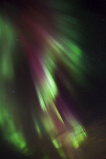 Northern Lights over the south of Iceland von Danita Delimont