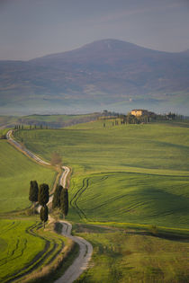 Cypress trees and winding road to villa near Pienza, Tuscany, Italy von Danita Delimont