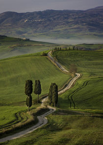 Cypress trees and winding road to villa near Pienza, Tuscany, Italy by Danita Delimont