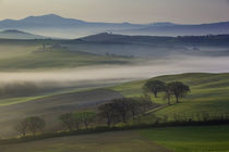 Misty dawn over the Tuscan countryside near San Quirico d'Or... by Danita Delimont