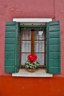 Shuttered windows Burano, Italy von Danita Delimont