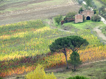 Europe, Italy, Tuscany von Danita Delimont