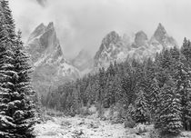 Tschamin Valley after snowstorm, Dolomites, Italy by Danita Delimont