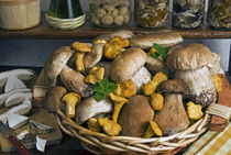 Penny bun, cap, chanterelles, mushrooms by Danita Delimont