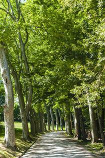 Park and garden of Villa Demidoff, Pratolino, Vaglia, Firenz... von Danita Delimont