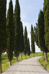 Winding Road, Tuscany, Italy von Danita Delimont