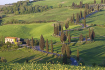 Winding Road, Tuscany, Italy by Danita Delimont
