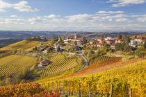 Vineyards, Treiso, nr Alba, Langhe, Piedmont (or Piemonte or Pie von Danita Delimont