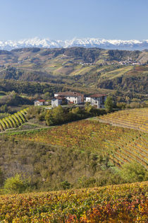 Vineyards, nr Alba, Langhe, Piedmont, by Danita Delimont