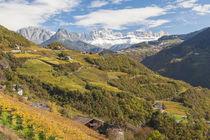Vineyards near Bolzano, Trentino-Alto Adige/Suedtirol, Italy von Danita Delimont