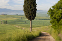 Val d'orcia, Tuscany, Italy von Danita Delimont
