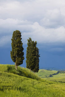 Europe, Italy, Tuscany by Danita Delimont