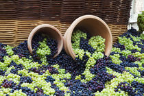 Fresh Grapes at Harvest Festival von Danita Delimont