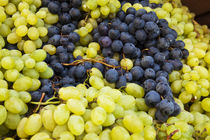 Harvested Fresh Grapes from the Tuscan Fields von Danita Delimont