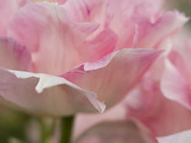 The Netherlands, Lisse, Keukenhof Gardens by Danita Delimont
