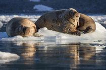 Norway, Svalbard, Spitsbergen by Danita Delimont